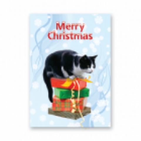 Cat (Black and White) Christmas cards pack of five